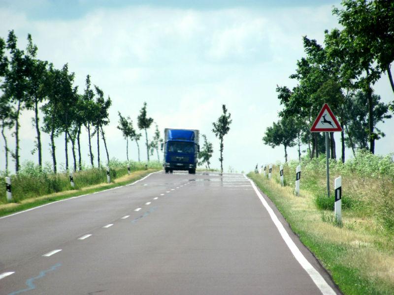 Wildwechsel Landstraße